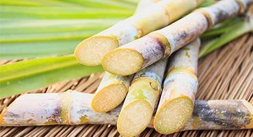 A biomassa de cana quebra paradigmas